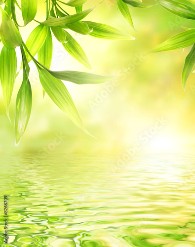Foto-Duschvorhang - Bamboo leaves reflected in rendered water (von Nejron Photo)