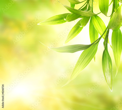 Doppelrollo mit Motiv - Green bamboo leaves over abstract blurred background