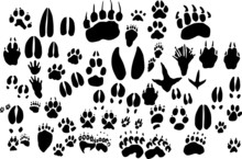 Collection Of Vector Outlines ...