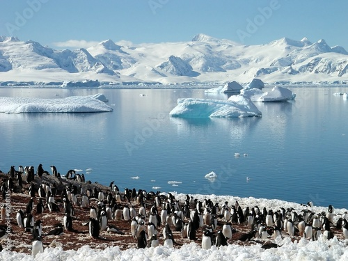 Canvas Prints Antarctic Antarctic penguin group