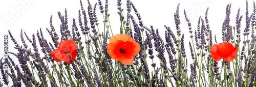 Deurstickers Lavendel Lavande