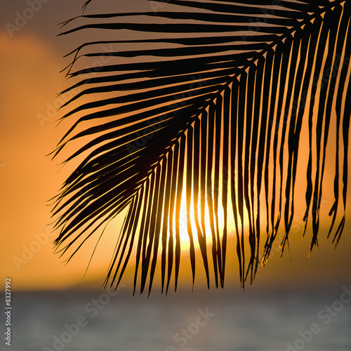 Foto Rollo Basic - Palm frond sunset. (von iofoto)