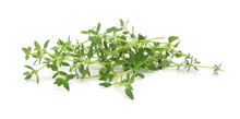Thyme Common Fresh Leaves