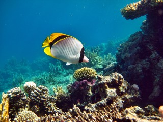Naklejka na ściany i meble Korallenriff