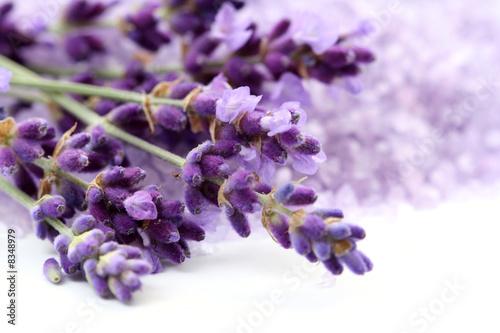 Foto-Duschvorhang - lavender