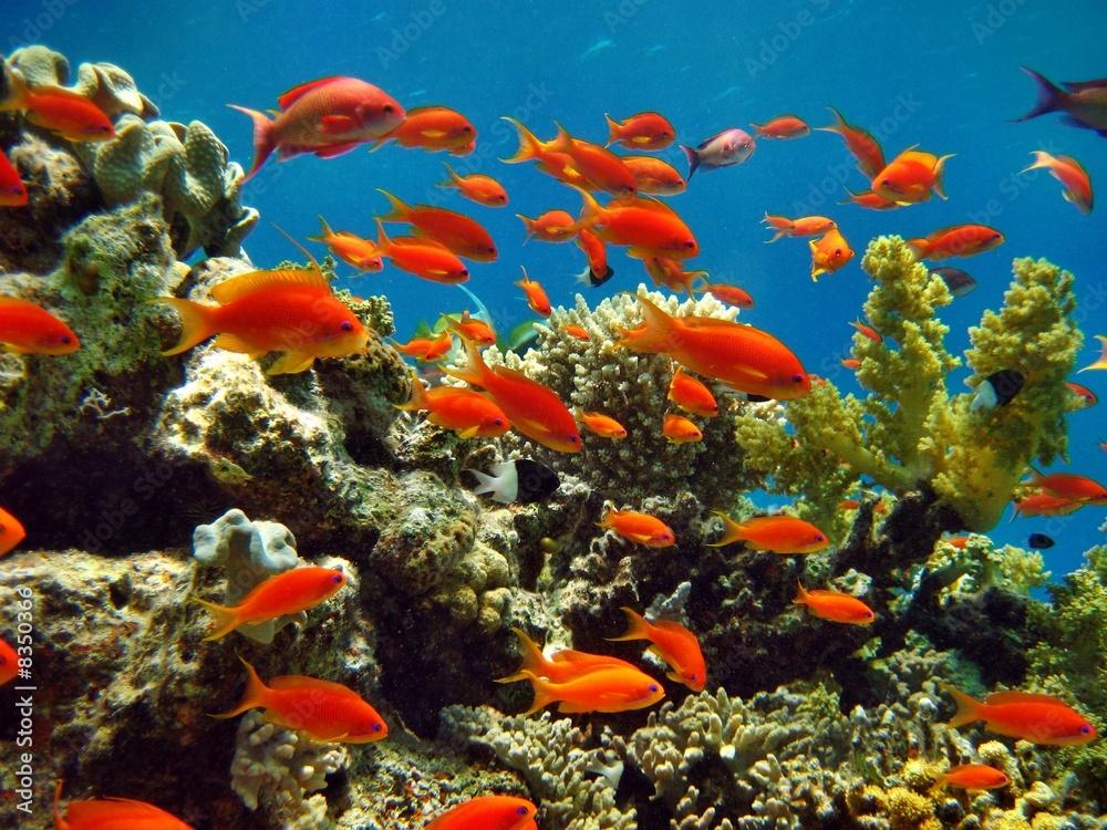 Foto-Flächenvorhang ohne Schienensystem - Korallenriff
