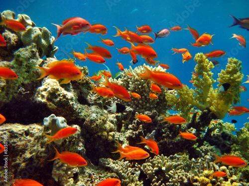 Foto-Flächenvorhang ohne Schienensystem - Korallenriff (von Hennie Kissling)