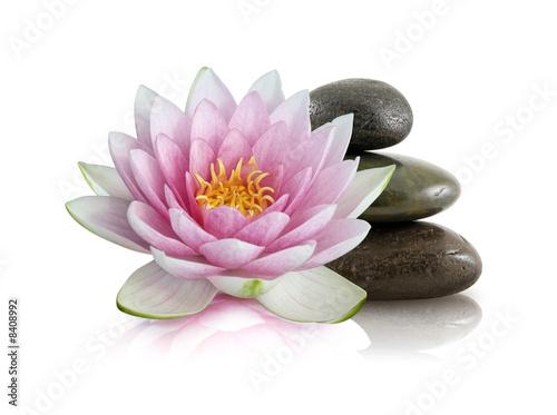 Garden Poster Lotus flower Fleur de lotus et galets zen