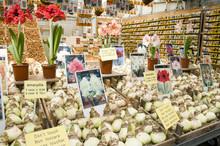 Flower Bulb Plant Store Display In Flower Market Amsterdam