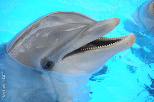 Foto-Flächenvorhang ohne Schienensystem - Delphin (von Stefan Richter)