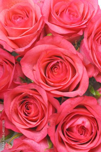 rosen #8533780