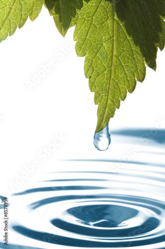 Doppelrollo mit Motiv - Water dripping of a leaf