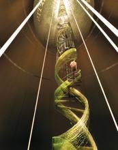 ADN évolution Dollar