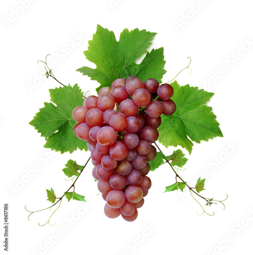 Decorative pink wine grape