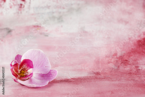 Aluminium Prints Orchid Blüte vor Malerei