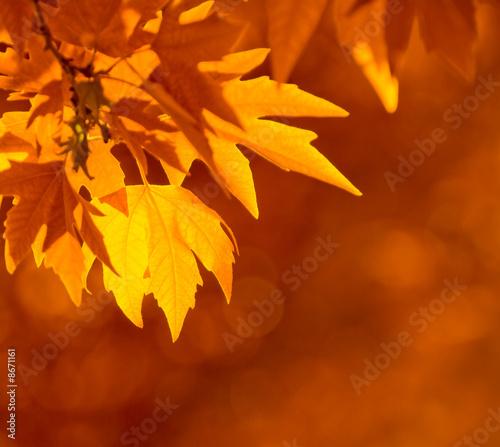 Foto-Kissen - autumn leaves, very shallow focus (von javarman)