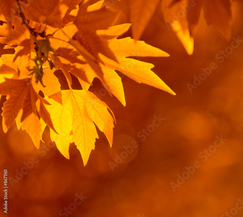 Foto-Kissen - autumn leaves, very shallow focus