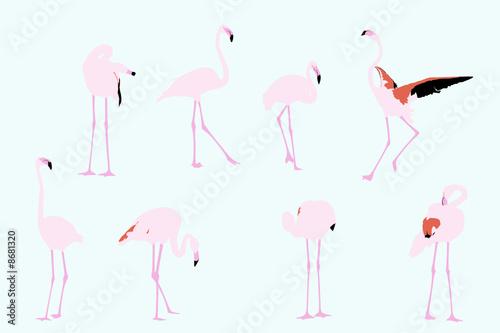 Spoed Foto op Canvas Flamingo flamingos, vector collection for designers