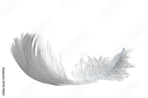 light swan feather