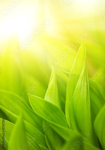 Doppelrollo mit Motiv - Fresh green grass (shallow DoF) (von Nejron Photo)