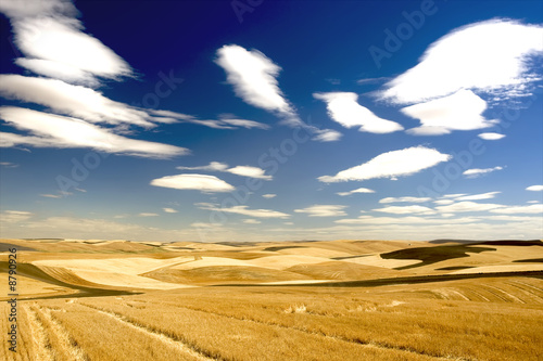 canvas print motiv - JEANNE : Checkered landscape of wheat, barley, lentil farm land
