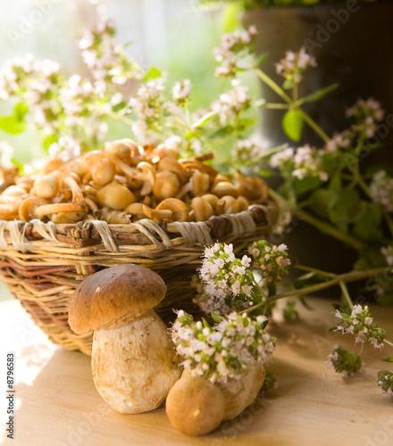 Photo mushroom