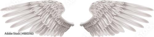 Fényképezés  White Wings