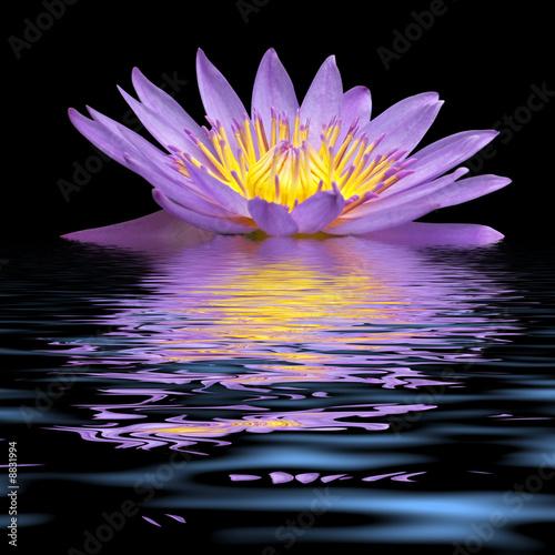 Garden Poster Lotus flower nymphéa en robe du soir
