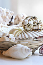 Several Various Seashells In A...