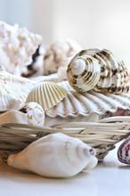 Several Various Seashells In A Basket Close Up