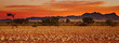 canvas print picture - Colorful sunset in Kalahari Desert, Namibia