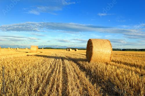 Fényképezés  Champ de blé et bottes de paille