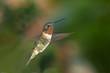 canvas print picture Mid-air flight of hummingbird