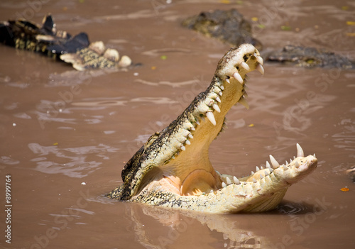 Photo Stands Crocodile Krokodil
