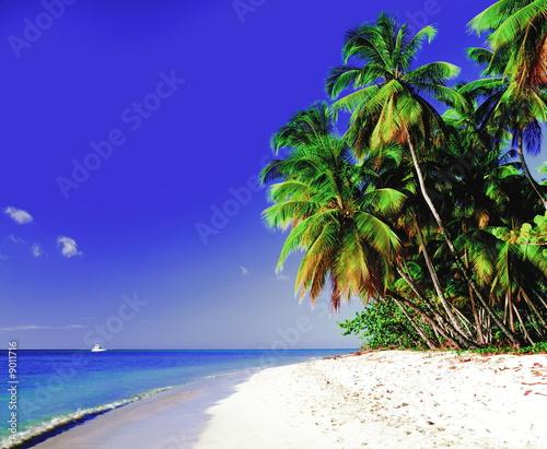 Foto-Rollo - Traumstrand auf Tobago (von PANORAMO)