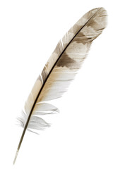 a feather isolated on white
