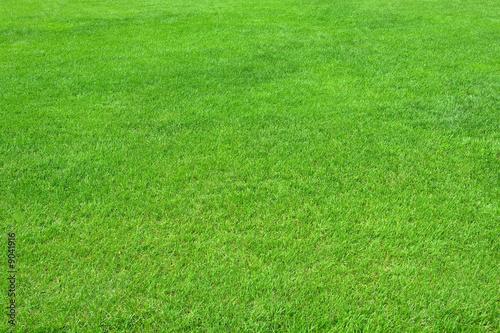Fotografía  Pure empty green grass field cut horizontal