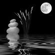 Zen Moonlight