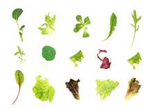 Salad Leaf Selection