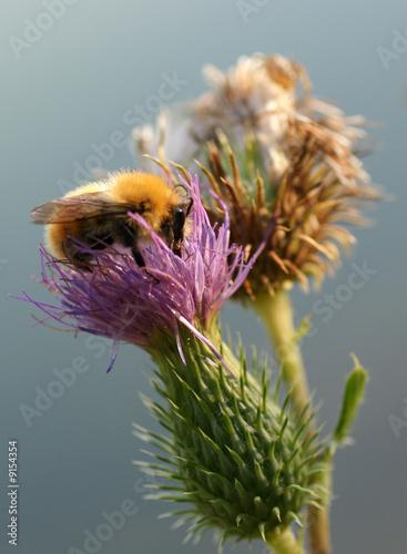 фотография nature et insecte
