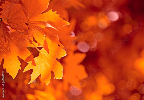 Foto-Schiebegardine ohne Schienensystem - autumn leaves, very shallow focus