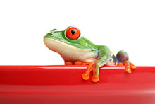 Red-eyed Tree Frog On Red Cera...