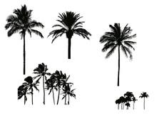 Silhouette De Palmier Pour Ill...