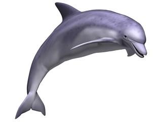 Fototapeta Leaping Dolphin