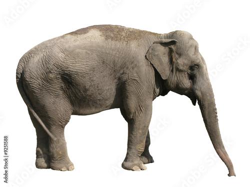 Canvas Prints Elephant Elephant Asian isolated on white background