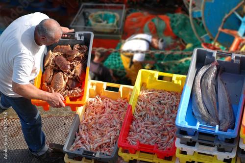 produits de la mer sur le port