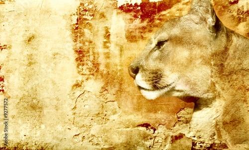 Ingelijste posters Puma lion