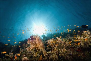 Fototapeta na wymiar coral and fish