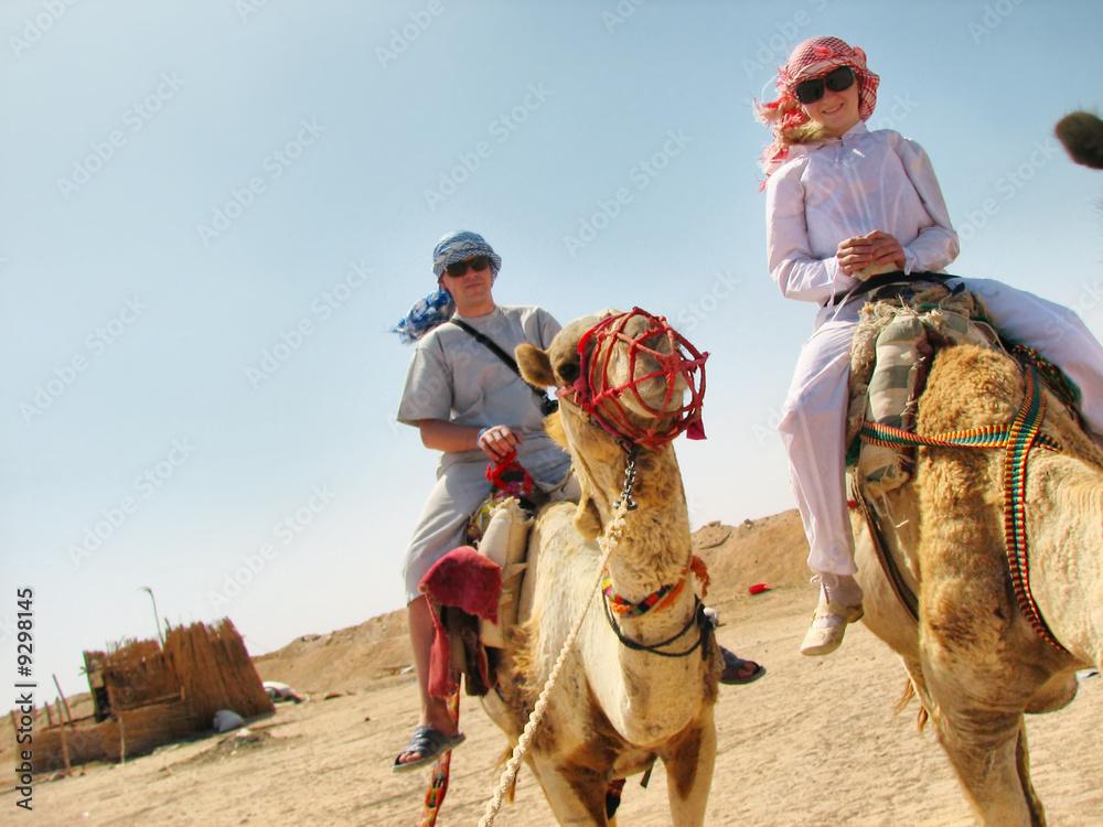 Fototapeta people traveling on camels in egypt desert