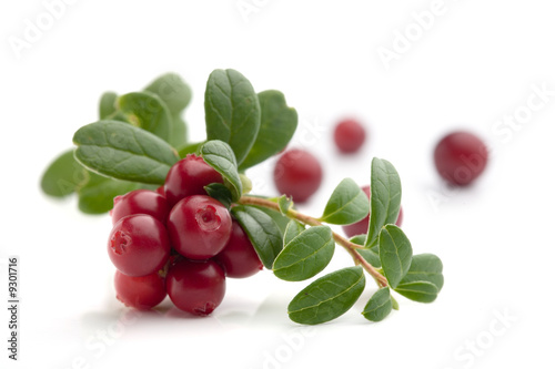 Fotografia  Bunch of fresh cranberries isolated on white
